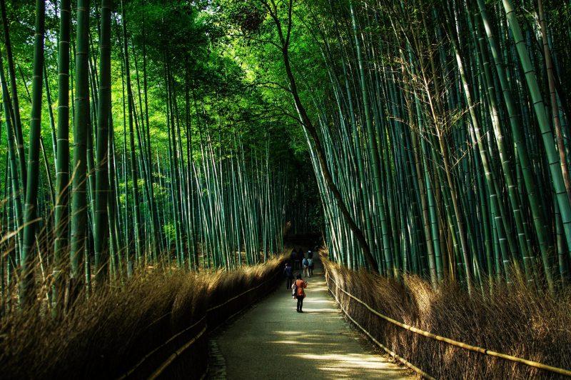 Kyoto - Arashiyama, Japan Tours, RediscoverTours.com