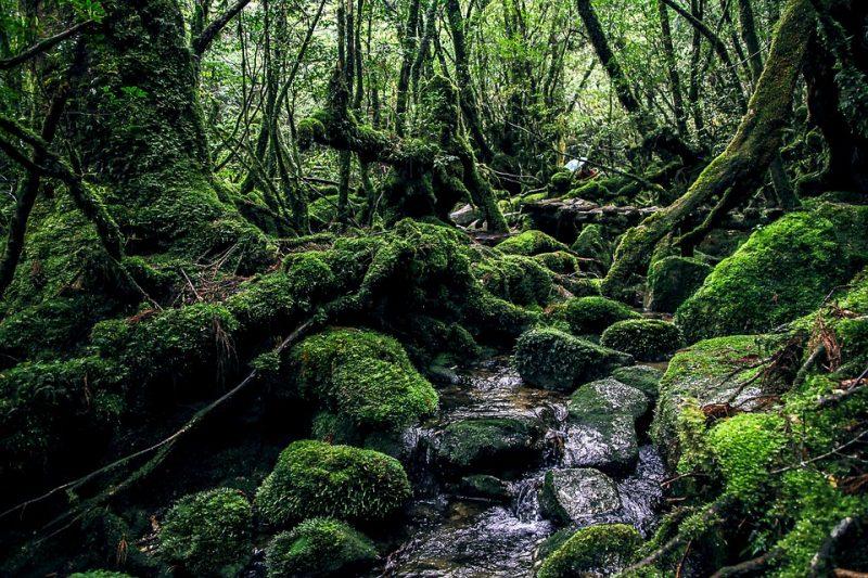 Yakushima 5, Japan Tours, RediscoverTours.com